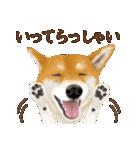 さすが!柴犬(敬語編)(個別スタンプ:07)