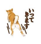 さすが!柴犬(敬語編)(個別スタンプ:08)