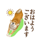 さすが!柴犬(敬語編)(個別スタンプ:09)