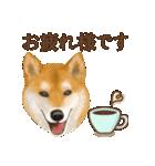 さすが!柴犬(敬語編)(個別スタンプ:11)