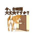さすが!柴犬(敬語編)(個別スタンプ:12)