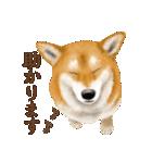 さすが!柴犬(敬語編)(個別スタンプ:14)