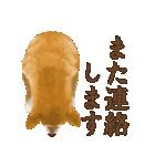 さすが!柴犬(敬語編)(個別スタンプ:19)