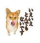 さすが!柴犬(敬語編)(個別スタンプ:23)
