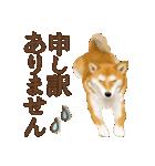 さすが!柴犬(敬語編)(個別スタンプ:24)
