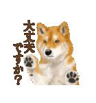 さすが!柴犬(敬語編)(個別スタンプ:25)