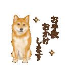 さすが!柴犬(敬語編)(個別スタンプ:27)
