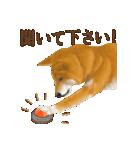 さすが!柴犬(敬語編)(個別スタンプ:32)