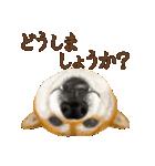 さすが!柴犬(敬語編)(個別スタンプ:37)