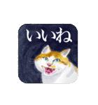 絵本に出てきそうな猫(個別スタンプ:08)