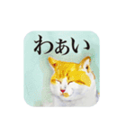 絵本に出てきそうな猫(個別スタンプ:09)