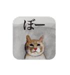 絵本に出てきそうな猫(個別スタンプ:32)