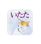 絵本に出てきそうな猫(個別スタンプ:37)