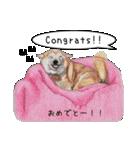 柴犬のここが好き5〜英語版〜(個別スタンプ:7)