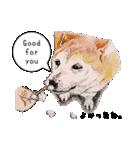 柴犬のここが好き5〜英語版〜(個別スタンプ:8)