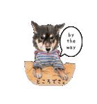 柴犬のここが好き5〜英語版〜(個別スタンプ:14)