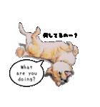 柴犬のここが好き5〜英語版〜(個別スタンプ:18)