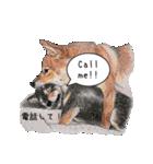 柴犬のここが好き5〜英語版〜(個別スタンプ:22)