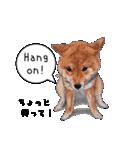 柴犬のここが好き5〜英語版〜(個別スタンプ:23)