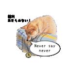 柴犬のここが好き5〜英語版〜(個別スタンプ:26)