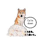 柴犬のここが好き5〜英語版〜(個別スタンプ:28)