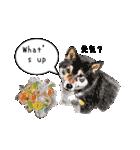 柴犬のここが好き5〜英語版〜(個別スタンプ:29)