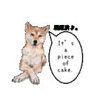 柴犬のここが好き5〜英語版〜(個別スタンプ:30)
