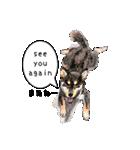 柴犬のここが好き5〜英語版〜(個別スタンプ:35)