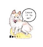 柴犬のここが好き5〜英語版〜(個別スタンプ:36)