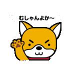 柴犬くんの日常 熊本弁編(個別スタンプ:1)