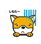 柴犬くんの日常 熊本弁編(個別スタンプ:7)