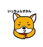 柴犬くんの日常 熊本弁編(個別スタンプ:8)