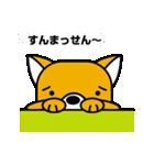柴犬くんの日常 熊本弁編(個別スタンプ:13)