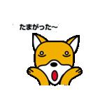 柴犬くんの日常 熊本弁編(個別スタンプ:20)