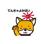 柴犬くんの日常 熊本弁編(個別スタンプ:22)