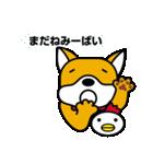 柴犬くんの日常 熊本弁編(個別スタンプ:23)