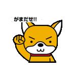 柴犬くんの日常 熊本弁編(個別スタンプ:31)