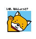 柴犬くんの日常 熊本弁編(個別スタンプ:33)