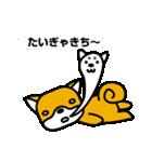 柴犬くんの日常 熊本弁編(個別スタンプ:36)