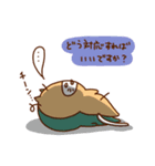 にゃんなま( Beginner)(個別スタンプ:13)
