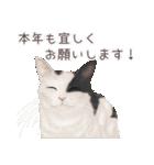zumoのネコスタンプvol.2(個別スタンプ:40)