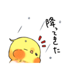 オカメくんとピンクちゃん Vol.3(個別スタンプ:05)