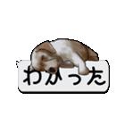 犬が寝ちゃってて読みにくいスタンプ(個別スタンプ:9)