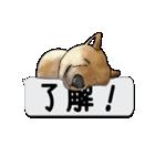 犬が寝ちゃってて読みにくいスタンプ(個別スタンプ:10)