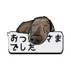 犬が寝ちゃってて読みにくいスタンプ(個別スタンプ:15)