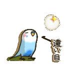 インコちゃん 冬パック(個別スタンプ:25)