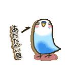 インコちゃん 冬パック(個別スタンプ:26)
