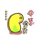 インコちゃん 冬パック(個別スタンプ:31)