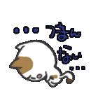 三毛ぬこ こめ&じぇすちゃ(個別スタンプ:3)