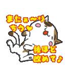 三毛ぬこ こめ&じぇすちゃ(個別スタンプ:5)